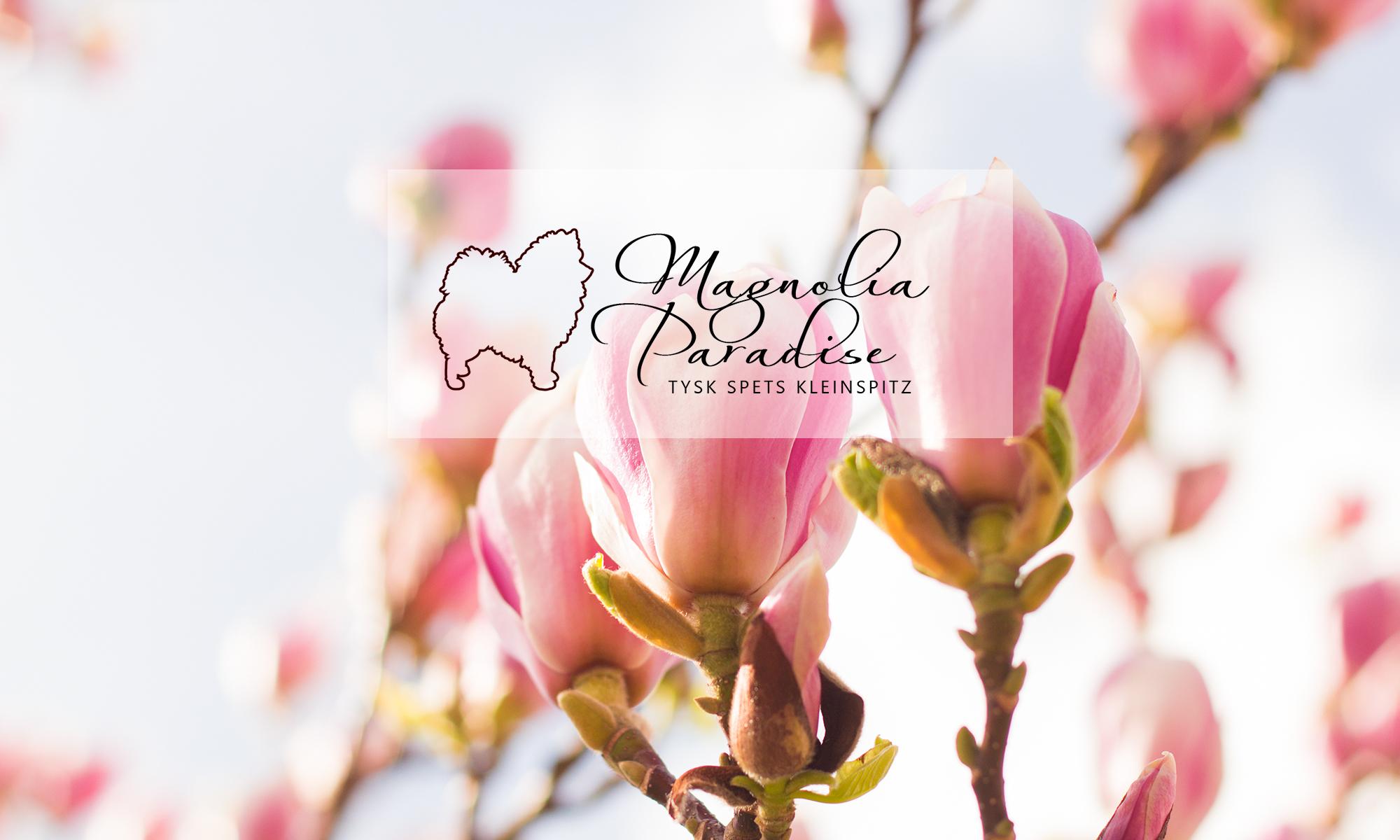 Magnolia Paradise